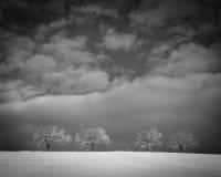 Arbres dans le paysage 207 d'hiver Photo libre de droits