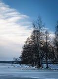 Arbres dans le paysage hivernal image libre de droits