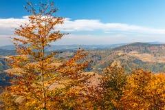 Arbres dans le paysage montagneux d'automne de premier plan image stock