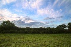 Arbres dans le pré à l'aube avec des nuages Image stock