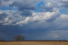 Arbres dans le pré contre le ciel de ressort photos stock