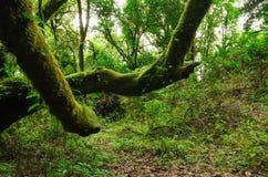 Arbres dans le primitif de forêt, Thaïlande Images stock