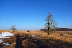 Arbres dans le temps de hiver-ressort Images libres de droits