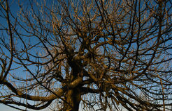 Arbres dans le temps de hiver-ressort Photos stock