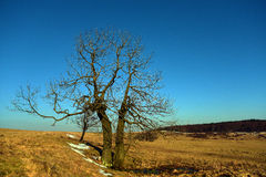 Arbres dans le temps de hiver-ressort Photographie stock libre de droits