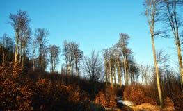 Arbres dans le temps de hiver-ressort Photographie stock