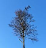Arbres dans le temps de hiver-ressort Image libre de droits