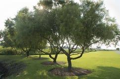 Arbres dans le terrain de camping au lever de soleil Photos stock