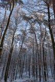 Arbres dans le winterscape Photos libres de droits