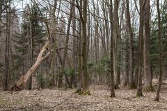 Arbres dans les bois Photographie stock