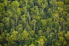 Arbres dans les bois Photos libres de droits