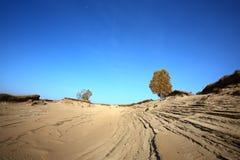 Arbres dans les déserts image libre de droits