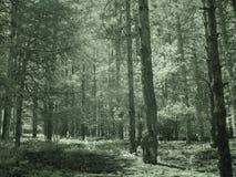 Arbres dans les forêts de la Turquie d Y Images stock