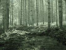 Arbres dans les forêts de la Turquie d Y Image stock