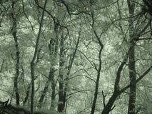 Arbres dans les forêts de la Turquie d Y Image libre de droits