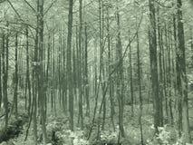 Arbres dans les forêts de la Turquie d Y Photographie stock