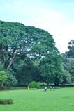 Arbres dans les jardins botaniques royaux, Kandy, Sir Lanka photos stock