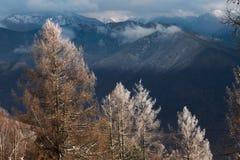 Arbres dans les montagnes en hiver Images libres de droits