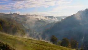 Arbres dans un brouillard sur la montagne banque de vidéos