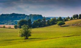 Arbres dans un domaine dans le comté de York rural, Pennsylvanie photographie stock libre de droits