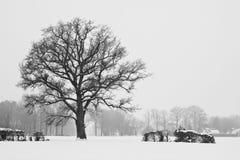 Arbres dans un horizontal blanc de l'hiver Images libres de droits