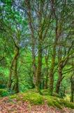 Arbres dans une forêt Image libre de droits