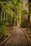 Arbres dans une forêt en bois rouge images stock