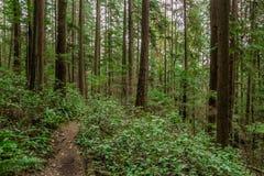 Arbres dans une forêt verte Images libres de droits