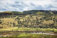 Arbres dans une rangée le long d'une route sur une colline Images libres de droits