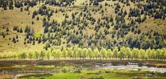 Arbres dans une rangée le long d'une route sur une colline Image libre de droits
