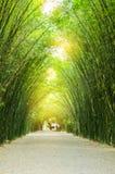 Arbres de bambou de tunnel Image stock