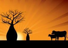 Arbres de Boab et deux vaches illustration de vecteur
