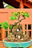 Arbres de bonsaïs au jardin d'agrément de ville Photographie stock libre de droits
