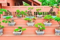 Arbres de bonsaïs au jardin d'agrément de ville Photo libre de droits