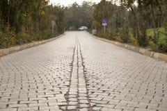 Arbres de bord de la route dans pierreux Photographie stock