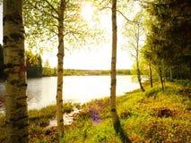 Arbres de bouleau blanc par la rivière avec briller du soleil Photos stock