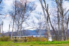 Arbres de bouleau donnant sur Ontario du nord de la ville de Wawa d Photos libres de droits