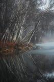 Arbres de bouleau nus reflétés dans l'eau immobile Photos stock