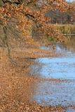 Arbres de chêne d'automne sur le côté d'un étang Photo libre de droits