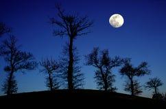 Arbres de chêne et pleine lune Photo stock