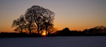 Arbres de chêne silhouettés par le coucher du soleil Image stock