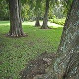 Arbres de chêne sous tension en Caroline du Sud Photographie stock