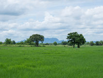Arbres de champ et ciel bleu Image stock