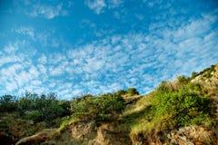 Arbres de champ et ciel bleu Photographie stock