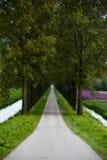 arbres de chemin Photos libres de droits
