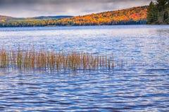 Arbres de chute avec le lac Image libre de droits