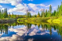 Arbres de chute avec le lac Image stock