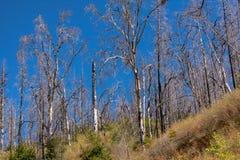 Arbres de chute sur la route 120 photos stock