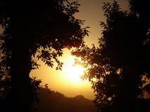 Arbres de coucher du soleil Images stock