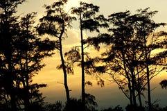 Arbres de coucher du soleil photos stock